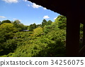 Tofuku-ji temple, national site of scenic beauty, aomomiji 34256075