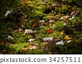 autumn, leaves, autumnal 34257511