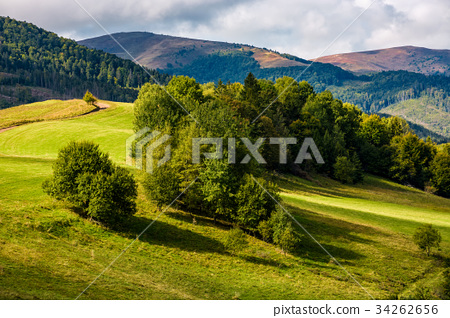 forest on hillside meadow in mountains 34262656