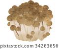 蟹味菇 蘑菇 食品 34263656