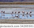 Bolivian Landscape 34265501