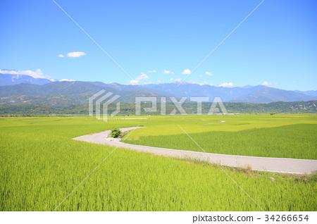 稻田 34266654
