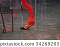 Flamingo bird in nature 34269203