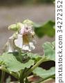 꽃, 플라워, 일년초 34272352