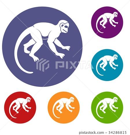 Capuchin monkey icons set 34286815