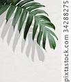 樹葉 葉子 植物 34288275