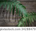 잎, 배경, 풍경 34288479