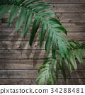 잎, 이파리, 잎사귀 34288481