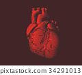 heart, vector, red 34291013