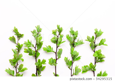 Branches with leaves of a tree, a bush, plants  34295315