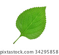 green leaf isolated on white background 34295858