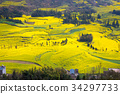 luoping, spring, field of rapeseed 34297733