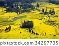luoping, spring, field of rapeseed 34297735