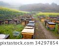 beekeeping, luoping, field of rapeseed 34297854