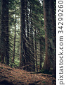 Forest of pine in the mountains 34299260