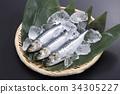沙丁鱼 日本沙丁鱼 鱼 34305227