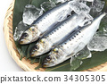 沙丁鱼 日本沙丁鱼 鱼 34305305