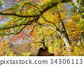 road in autumn park 34306113