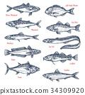 鱼 草图 素描 34309920