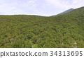 shiretoko, forest, aerial 34313695