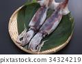 烏賊 墨魚 魷魚 34324219
