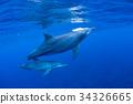 海豚 海底的 海裡 34326665