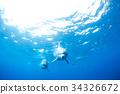 海豚 海底的 海裡 34326672