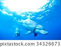 海豚 海底的 海裡 34326673