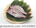 생선, 어류, 도미 34326965