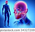 3D illustration of Cranium, medical concept. 34327209