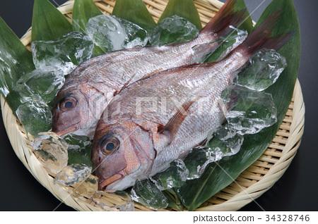 鯛魚 34328746