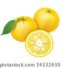 檸檬 日本柚子 水果 34332630