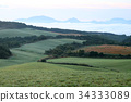 meadow, pasture, morning 34333089