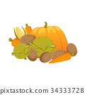 vegetable, vector, carrot 34333728