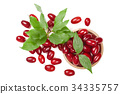 dogwood berry with leaf in a wooden bowl isolated 34335757