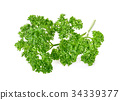 Fresh parsley isolated on a white background 34339377