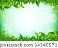 Organic tea leavess 34340971