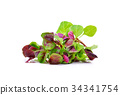 Red leaf vegetable Amaranth on white background 34341754