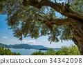 Shōdo, Island, olive 34342098