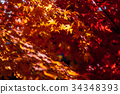Yellow to red leaves on branch of maple in autumn 34348393