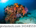 Underwater coral underwater with bright color fish 34348559