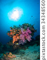 Underwater coral underwater with bright color fish 34348560