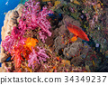 Under the sea coral reefs and colorful fish 34349237