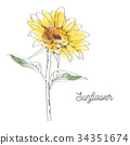 Yellow sunflower illustration design on white  34351674