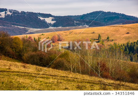 rolling hills with naked forest in autumn 34351846