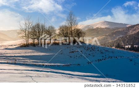 naked trees on hillside on foggy winter sunrise 34351852