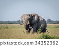 Elephant bull standing in the high grass. 34352392