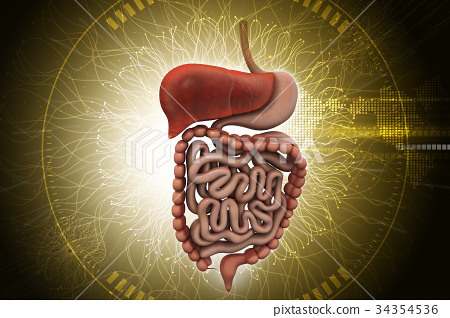 Human digestive system with 34354536