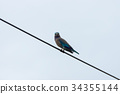 Bird perched on power line. 34355144
