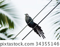 Birds perched on power lines 34355146